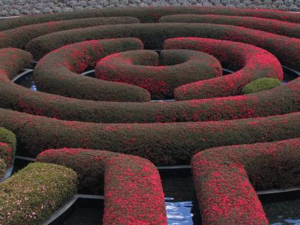 getty-maze1.jpg