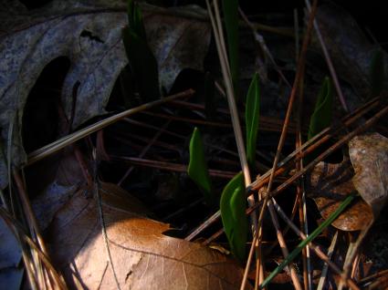 emerging-from-leaves.jpg