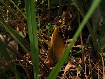 natural-leaf-mulch.jpg