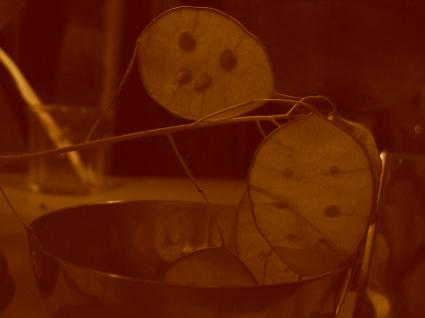 lunaria-light.jpg