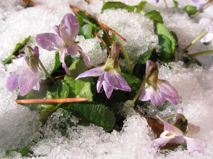 Jardinería de clima frío | Bellas Jardinería
